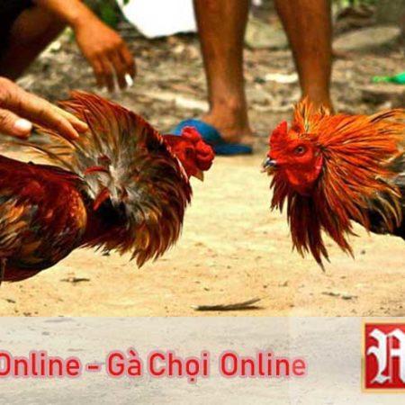 Đá Gà Online – Chơi Gà Chọi Trực Tuyến